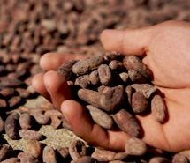 Bean to Bar: Chocolate is the upcoming speciality market